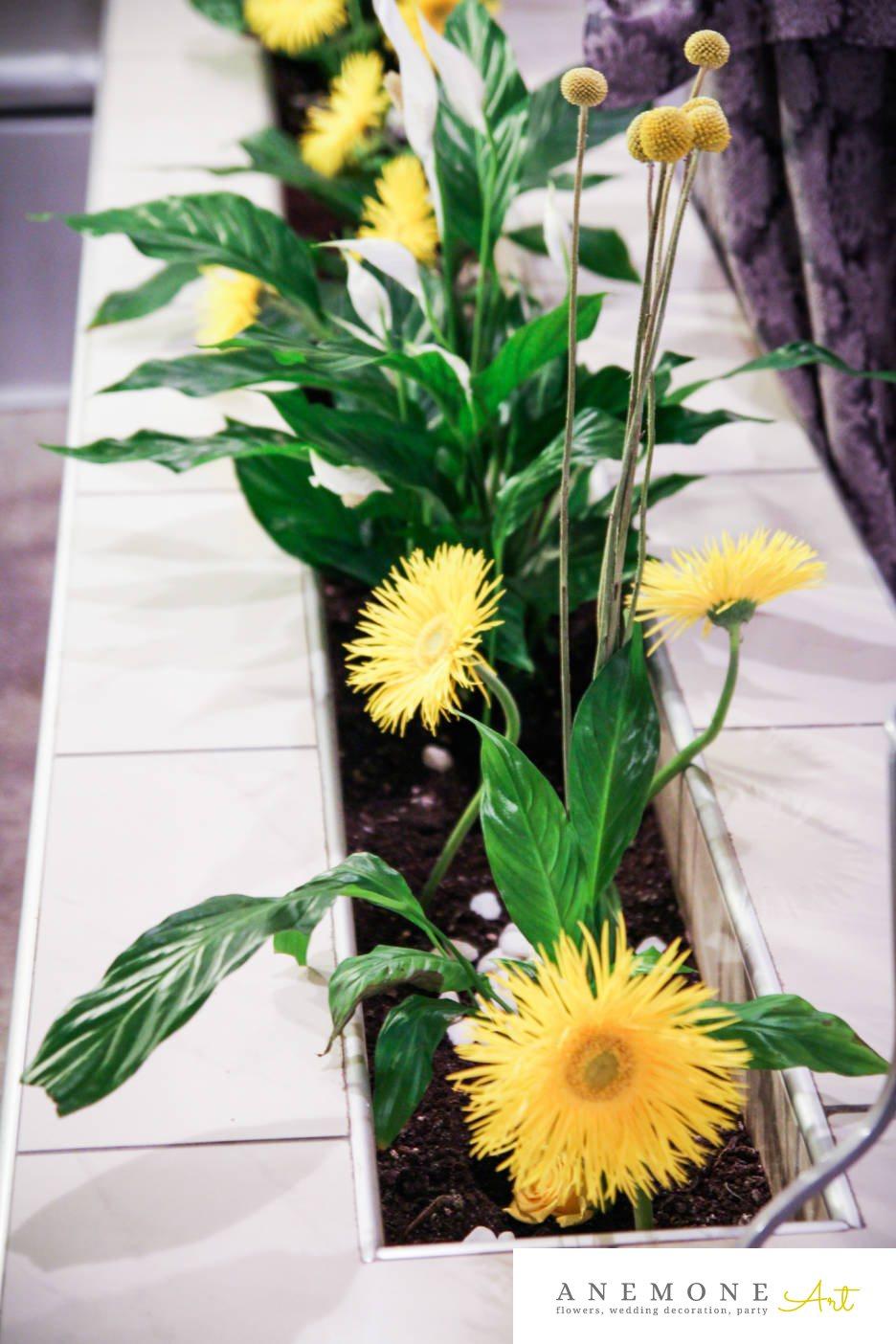 Poza, foto cu Flori de nunta craspedia, crengi, decor sala, galben, mini-gerbera in Arad, Timisoara, Oradea (wedding flowers, bouquets) nunta Arad, Timisoara, Oradea