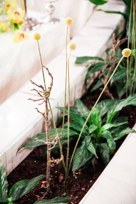 decor pamant galben craspedia